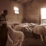Azienda Agricola Le Sodere (34)