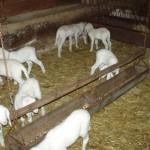 Azienda Agricola Le Sodere (24)