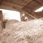 Azienda Agricola Le Sodere (38)