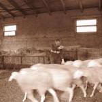 Azienda Agricola Le Sodere (40)
