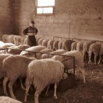 Azienda Agricola Le Sodere (5)