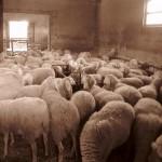 Azienda Agricola Le Sodere (57)