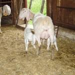 Azienda Agricola Le Sodere (9)